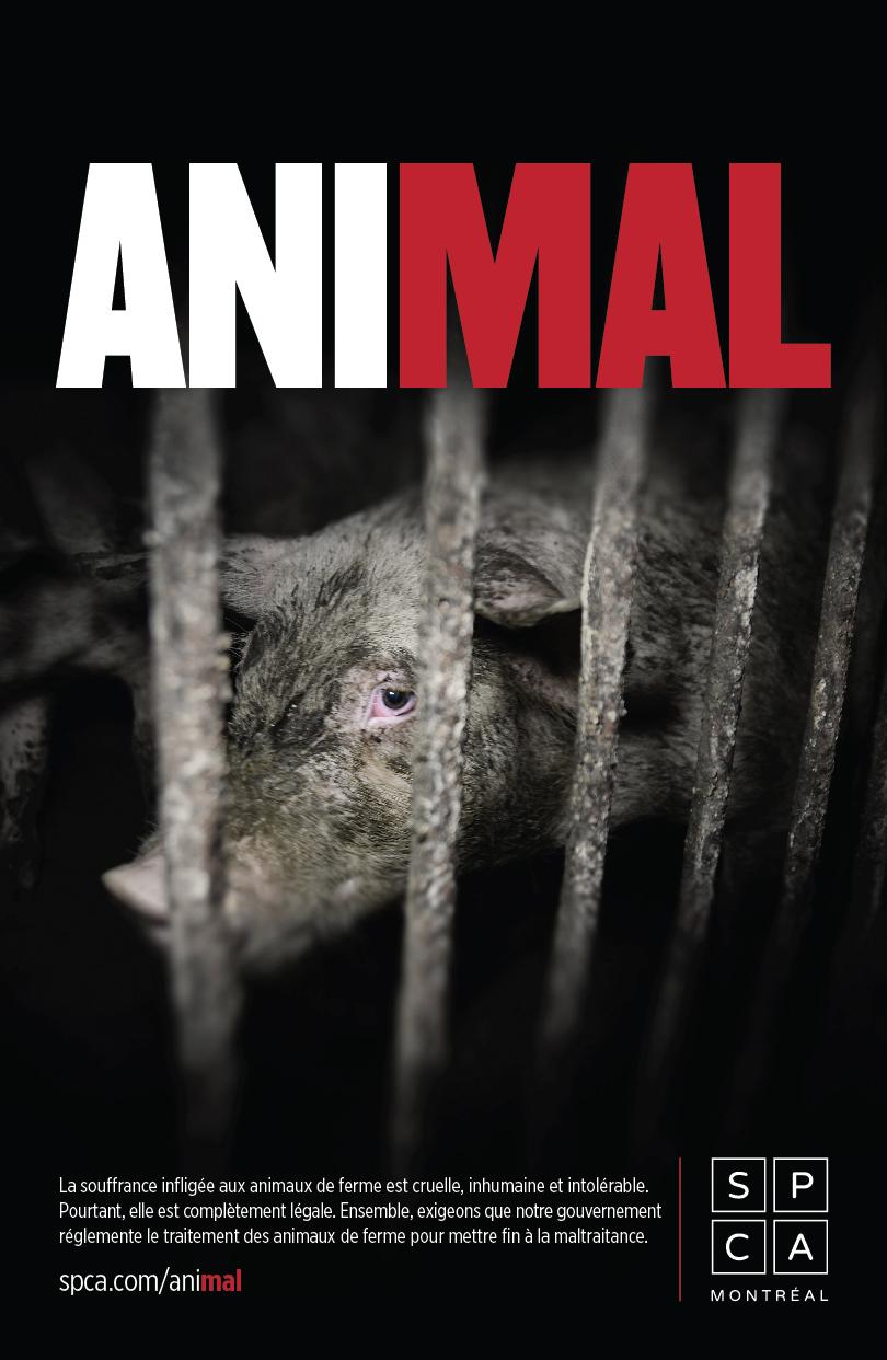 affiche_animal_v2